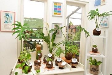 Solusi Hijau di Ruang Indoor